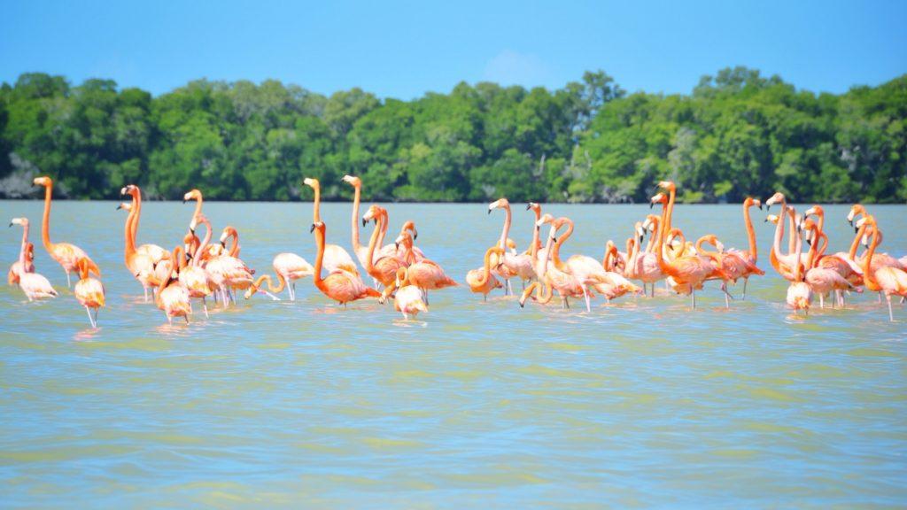 La réserve du parc national Rio Lagartos, Mexique
